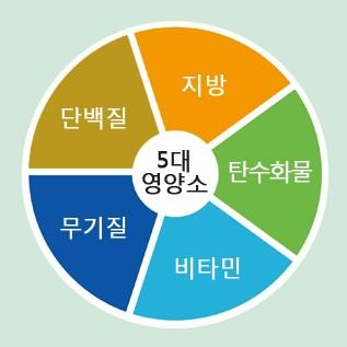 다이어트 식단 추천 5대 영양소